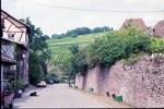 写真8リクヴィルの葡萄畑.jpg