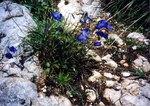写真8青い花.jpg