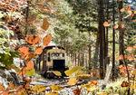 檜林を走るトロッコ列車.jpg