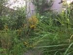 静岡の裏庭.JPG